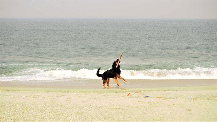 dog_beach