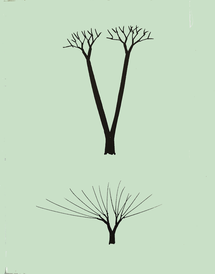 Dibujar Un árbol Serie Aprender A Mirar Aprender A